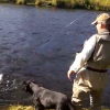 KODIAK SILVERS MOVIE HERE!!!! AAA MADNESS! (coho salmon fishing in Alaska)