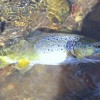 Trout On The Fly Slideshow