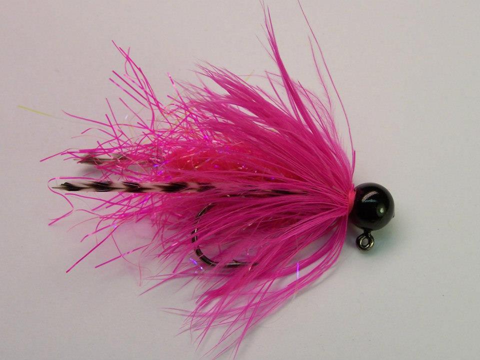 Shrimp hackletail cerise