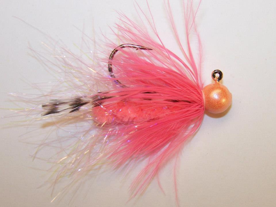 Shrimp hackletail